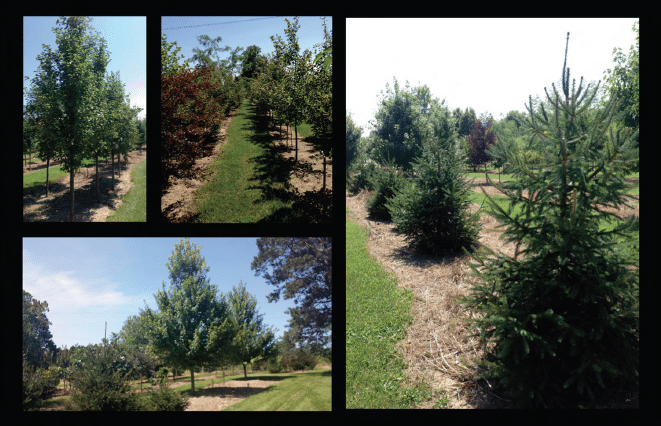 Indianapolis landscaper tree sale 2014