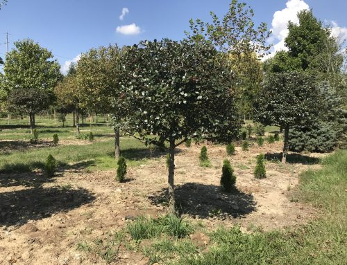 Wholesale To The Public – Annual Tree Sale – October 25, 26, 27